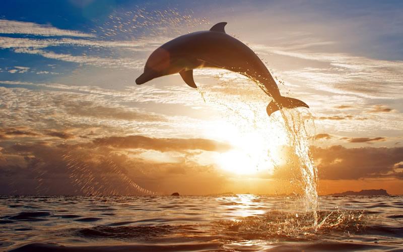 delfin - skoki w morzu Puerto Vallarta